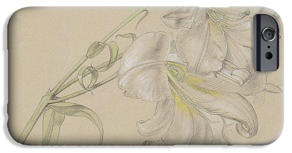 Plant Pastels iPhone Cases - Lily iPhone Case by Albert Williams