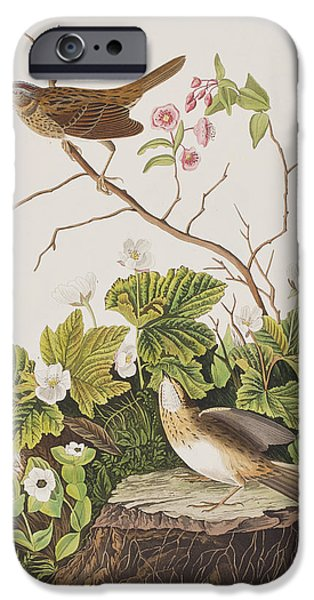 Lincoln iPhone Cases - Lincoln Finch iPhone Case by John James Audubon