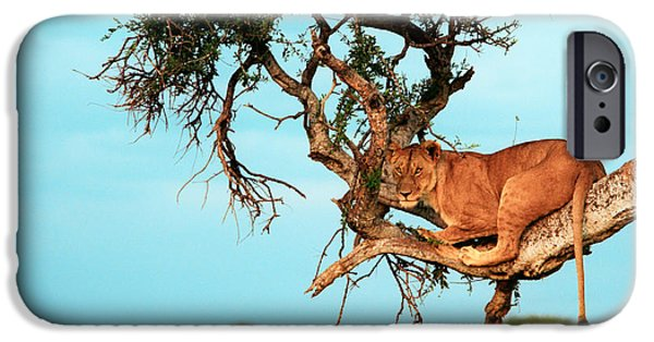 Animals iPhone Cases - Lioness in Africa iPhone Case by Sebastian Musial