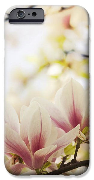Petals Pyrography iPhone Cases - Magnolia iPhone Case by Jelena Jovanovic