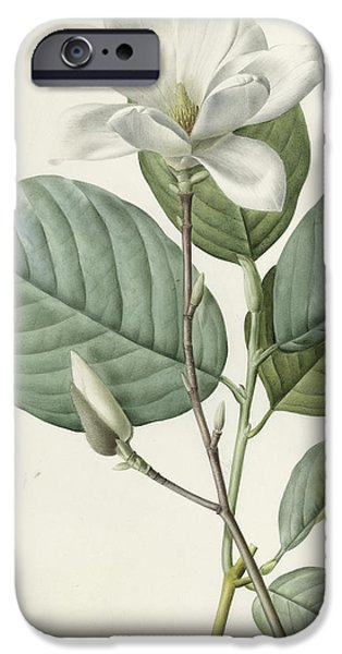 Botanical Drawings iPhone Cases - Magnolia iPhone Case by Pierre Joseph Redoute
