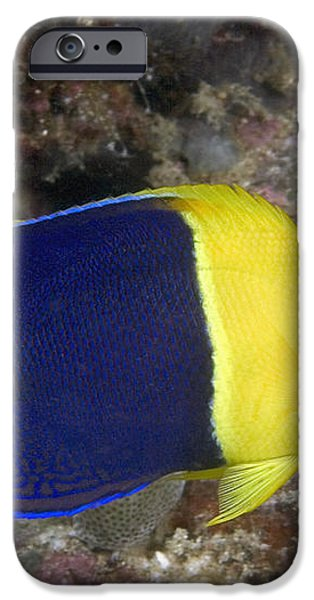 Malaysia Marine Life iPhone Case by Dave Fleetham - Printscapes