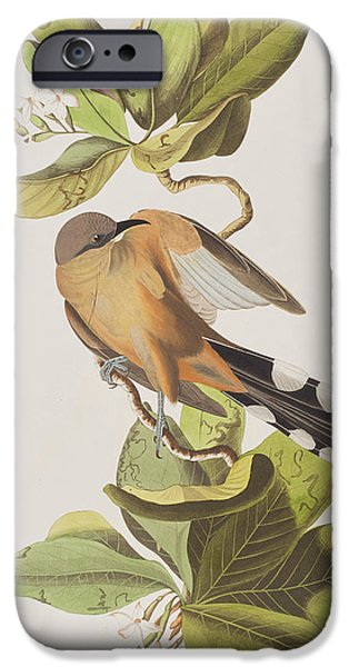 Mangrove iPhone Cases - Mangrove Cuckoo iPhone Case by John James Audubon