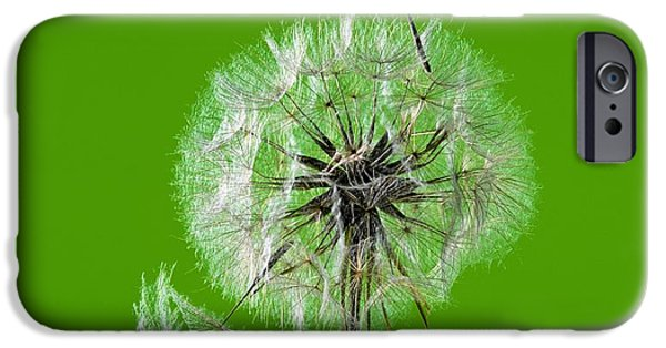 Cut-outs iPhone Cases - Meadow Salsify Seedhead iPhone Case by Martyn F. Chillmaid