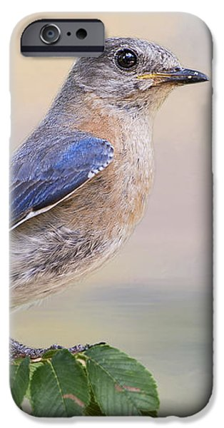Morning iPhone Cases - Misty Morning Bluebird iPhone Case by Bonnie Barry