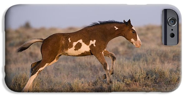 Overo iPhone Cases - Mustang Foal Galloping iPhone Case by Jean-Louis Klein & Marie-Luce Hubert
