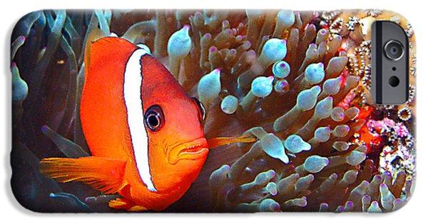 Clown Fish Photographs iPhone Cases - Nemo iPhone Case by Jean Noren