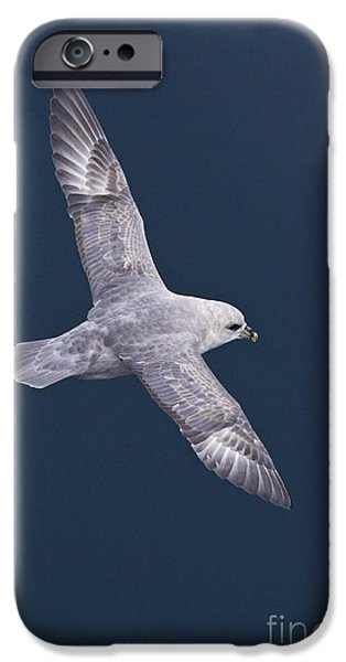Sea Birds iPhone Cases - Northern Fulmar iPhone Case by Jean-Louis Klein & Marie-Luce Hubert