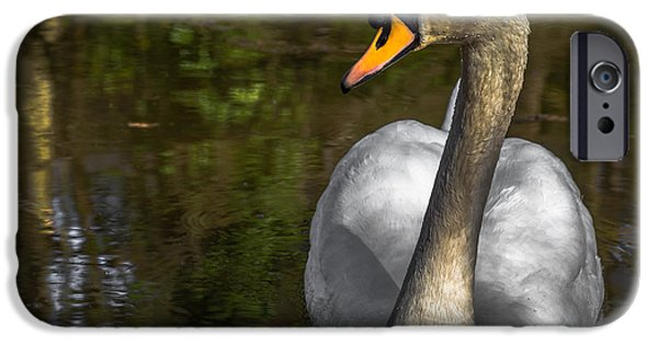Swans... iPhone Cases - Not so whiter than white iPhone Case by Chris Fletcher