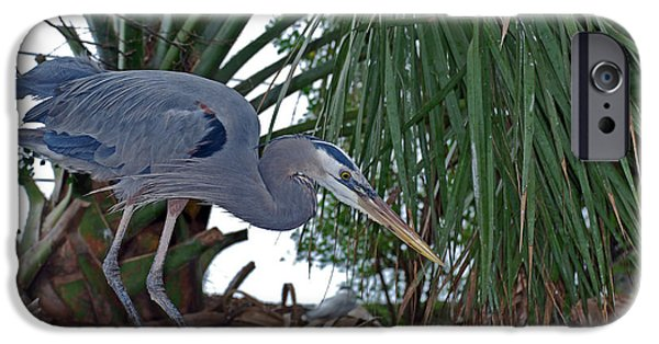 Birds iPhone Cases - Old Blue iPhone Case by Skip Willits