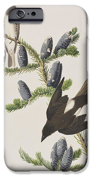 Flycatcher iPhone Cases - Olive sided Flycatcher iPhone Case by John James Audubon
