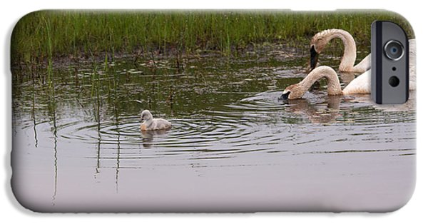 Swans... iPhone Cases - On the Go iPhone Case by Linda Kerkau