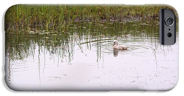 Swans... iPhone Cases - On the Pond iPhone Case by Linda Kerkau