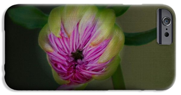 Flora iPhone Cases - Opening Day iPhone Case by Beverly Canterbury