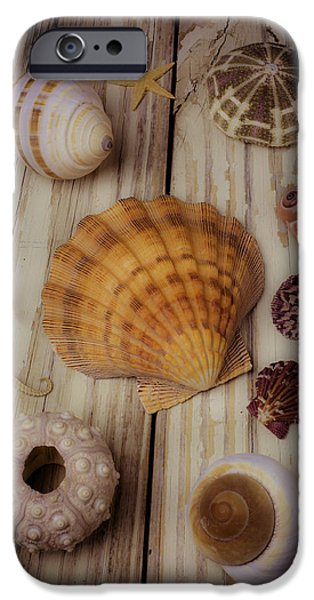 Marine iPhone Cases - Orange Sea Shell iPhone Case by Garry Gay