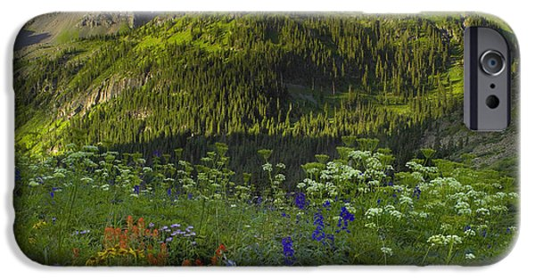Mountain iPhone Cases - Orange Sneezeweed And Indian Paintbrush iPhone Case by Tim Fitzharris