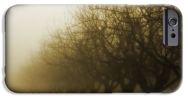 Sillouhuette iPhone Cases - Orchard in Fog iPhone Case by Rebecca Cozart