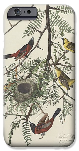 Wild Orchards Drawings iPhone Cases - Orchard Oriole iPhone Case by John James Audubon