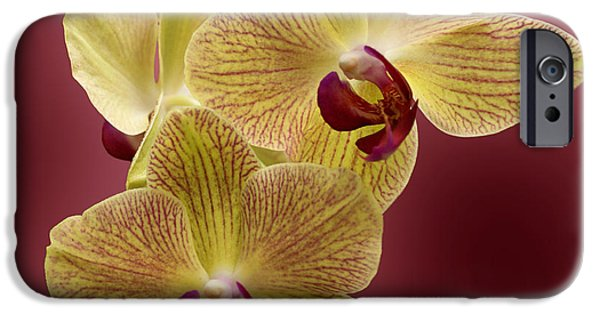 Evansville iPhone Cases - Orchid iPhone Case by Sandy Keeton