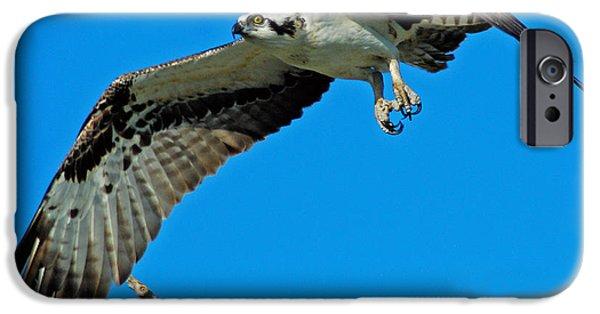 Flight iPhone Cases - Osprey iPhone Case by Bob O