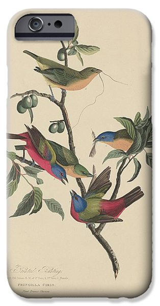 Bunting iPhone Cases - Painted Bunting iPhone Case by John James Audubon