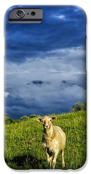 Raining iPhone Cases - Passing Storm and Sheep iPhone Case by Thomas R Fletcher