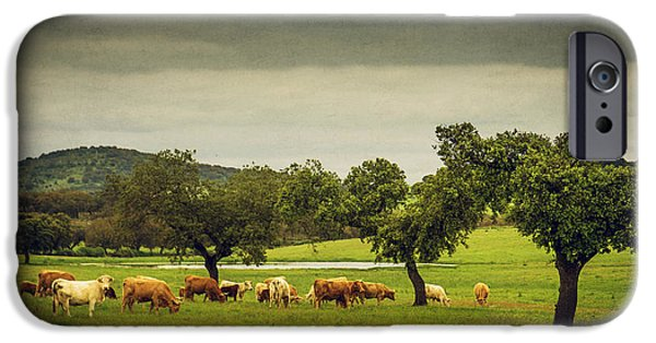 Agricultural iPhone Cases - Pasturing Cows iPhone Case by Carlos Caetano