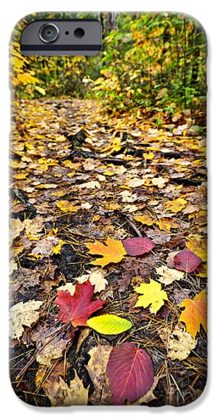Maple Season iPhone Cases - Path in fall forest iPhone Case by Elena Elisseeva