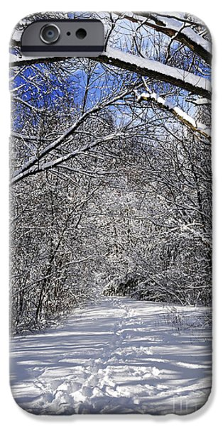 Winter iPhone Cases - Path in winter forest iPhone Case by Elena Elisseeva