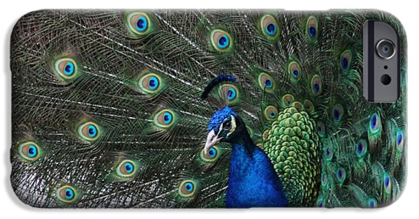 Close Up Pyrography iPhone Cases - Peacock Beauty iPhone Case by Valia Bradshaw
