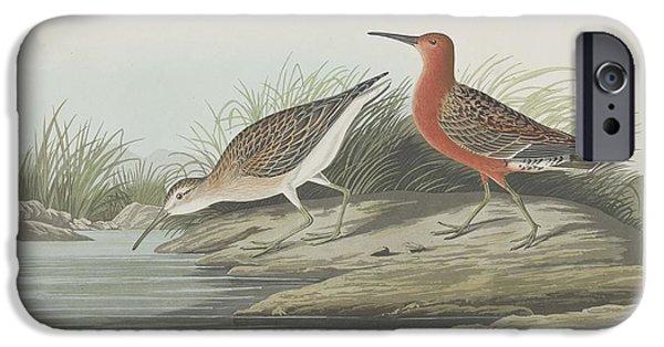 Shorebird iPhone Cases - Pigmy Curlew iPhone Case by John James Audubon