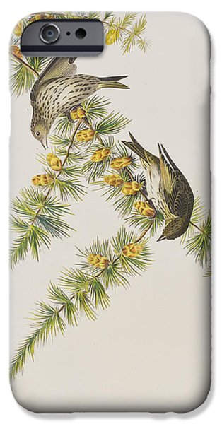 Pines Drawings iPhone Cases - Pine Finch iPhone Case by John James Audubon