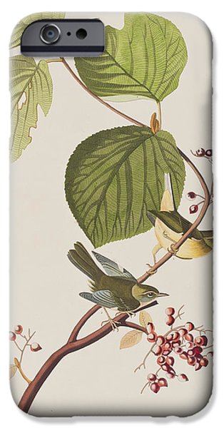 Feather Drawings iPhone Cases - Pine Swamp Warbler iPhone Case by John James Audubon