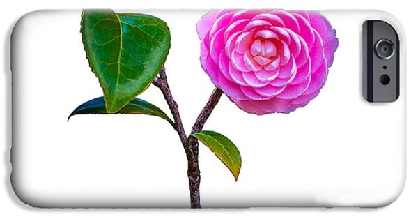 Pastel iPhone Cases - Pink Camellia on White iPhone Case by John Bailey