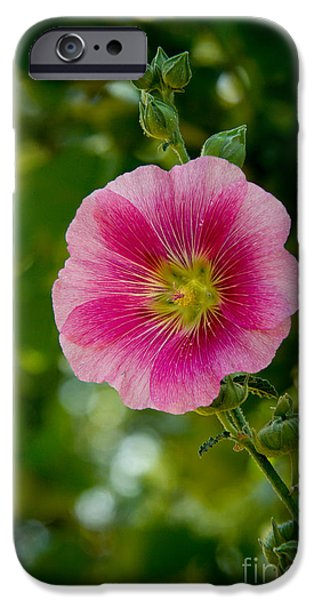 Haybale iPhone Cases - Pink Hollyhock iPhone Case by Robert Bales