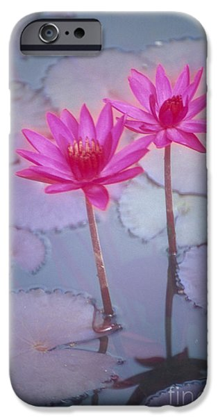 Recently Sold -  - Nature Center Pond iPhone Cases - Pink Lily Blossom iPhone Case by Ron Dahlquist - Printscapes