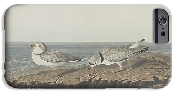Seagull Drawings iPhone Cases - Piping Plover iPhone Case by John James Audubon