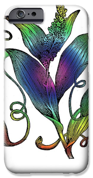 1870 Mixed Media iPhone Cases - Pitcher Plant iPhone Case by Eric Edelman