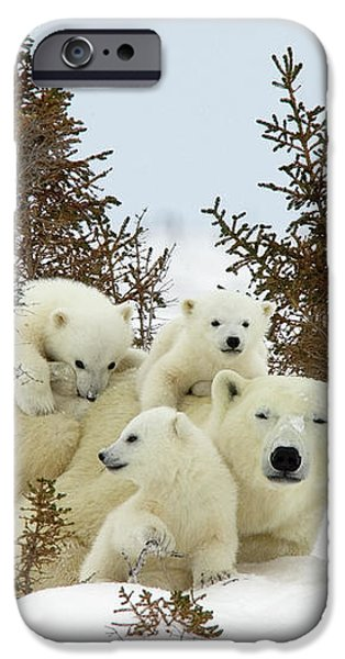 Polar Bear Ursus Maritimus Trio iPhone Case by Matthias Breiter