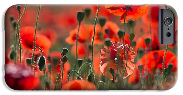 Blooming Pyrography iPhone Cases - Poppy Field iPhone Case by Peteris Vaivars
