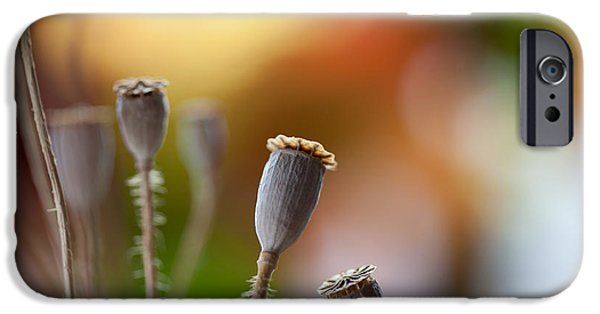 Dried iPhone Cases - Poppy Pods iPhone Case by Nailia Schwarz