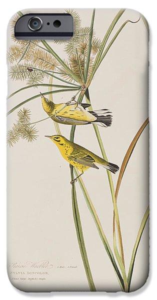 Botanical Drawings iPhone Cases - Prairie Warbler iPhone Case by John James Audubon