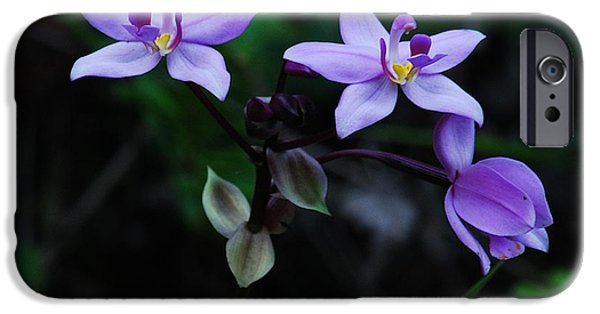 Terrestrial iPhone Cases - Purple Orchids 2 iPhone Case by Michael Peychich