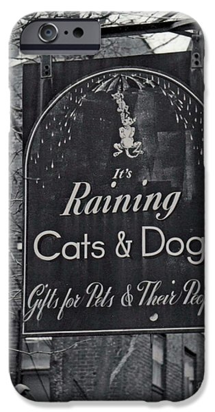 Dogs iPhone Cases - Raining Cats and Dogs iPhone Case by Juls Adams
