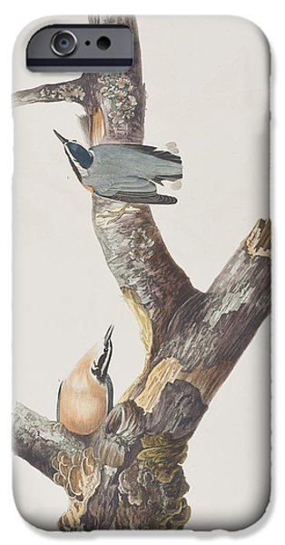 Red Drawings iPhone Cases - Red Breasted Nuthatch iPhone Case by John James Audubon