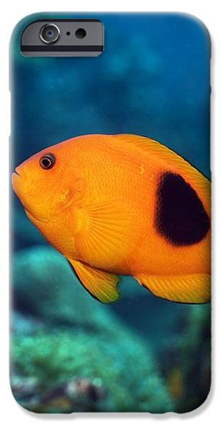 Red Saddleback Anemonefish And Soft Coral iPhone Case by Georgette Douwma