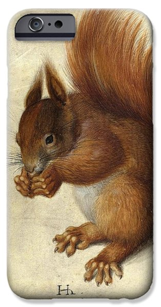 Nature Study Paintings iPhone Cases - Red Squirrel  iPhone Case by Hans Hoffmann