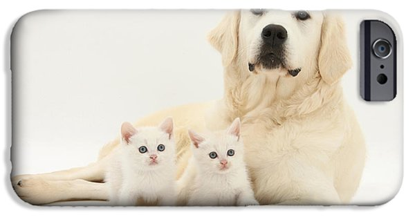 House Pet iPhone Cases - Retriever With Friendly Kittens iPhone Case by Mark Taylor