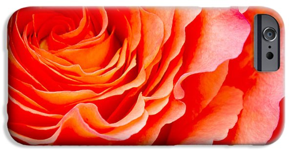 Floral Photographs iPhone Cases - Rose iPhone Case by Angela Doelling AD DESIGN Photo and PhotoArt