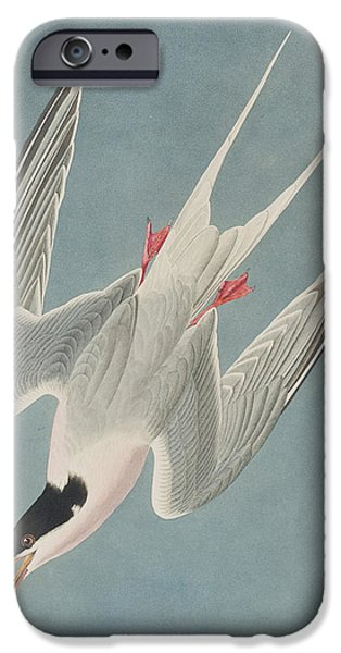 Seagull iPhone Cases - Roseate Tern iPhone Case by John James Audubon